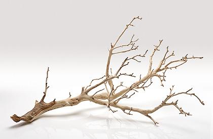 Giusfredi fiori secchi e prodotti naturali per la decorazione - Rami secchi decorativi ...